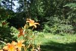 Bev Lovejoy's garden